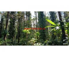 3 acre coffee estate for sale near shanivarsanthe