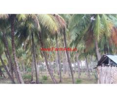 12 Acres Coconut farm land for sale near Palladam