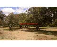 38 acre Mango Farm Groove is available for sale in KV Palli mandal