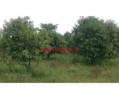 6.5 acers mango garden for sale at Chitoor, 75KMS from Tirupathy