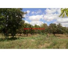 30 acre agriculture land for sale at Sambepalli Mandal, Kadapa