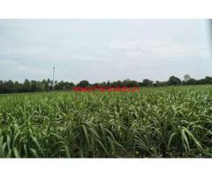 12 Acres Farm land for sale in Purasampatti,22km from Trichy