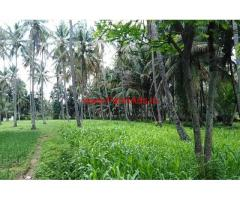 3.03 acre coconut farm land for sale at Channapatna, 2 KMS from Highway