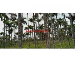 6 Acres Coconut and Areca Farm land for sale near Hiriyur