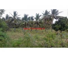 2.16 Acres Coconut Farm Land for saleat Paramenahalli - Hiriyur