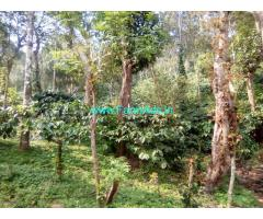 6 Acre Coffee Estate For Sale In Mudigere, Chikmagalur