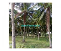 12 Acres Coconut farm for sale in Nagamangala - Mandya
