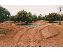 1 acre 20 gunta mango farm land for sale 20 km from channapatna