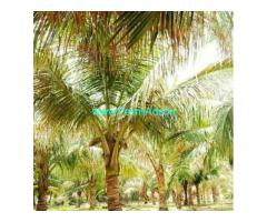 4.33 Acres Coconut Farm Land for sale at Siruvani