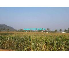 6.5 Acres Agriculture Land for sale in Paithur