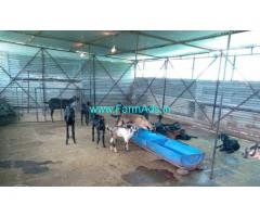 5.31 Acres Farm Land goat farm for sale at Chitkotta, near Humnabad.