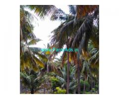 6 Acres Coconut Farm Land for sale in Kundamam
