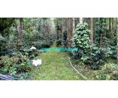 7.5 acre coffee estate for sale in Chikmagalur