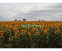 5 Acre Agriculture Land for Sale near Annigeri