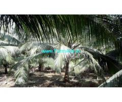 1.53 Acres Coconut Farm Land for sale near Mylaudy