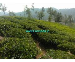 8 Acres Tea Estate for Lease in Coonoor