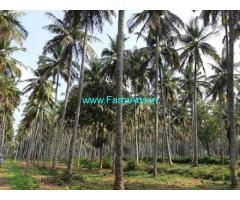 40 Acres Coconut Farm for Sale in Heggadadevanakote