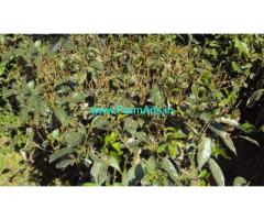 Unmaintained 65 Acres Coffee and Tea Estate for Lease in Kotagiri