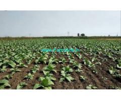 5 Acres Metta Agricultural land for Sale near Gannavaram