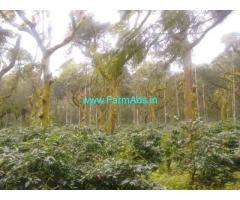 5 Acres Coffee Estate for Sale near Chikmagalur, Sringeri Road