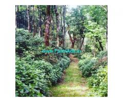 250 Acres Coffee Estate for Sale in Chikmagalur