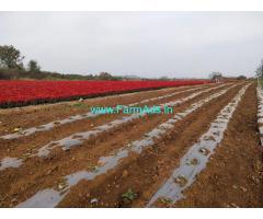 3 Acres Plain Agriculture Land for Sale at Belur,Hassan Belur Highway