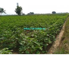9.5 Acre Agriculture land for sale Thoppampatti, 5 km from uppar dam
