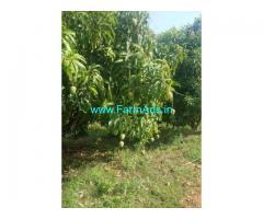 50 acres mango farm land for sale near Penukonda