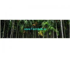80 Cents Arecanut Agriculture Land For Sale in Kurnad,Mudipu