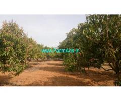 7 acres mango groove for sale 30 kms from Madanapalli town