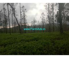 3 Acres Tea Estate for Sale near Mananthavady,Kannur Mananthavady road