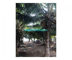 3.5 Acres Coconut Farm Land with Farm House for sale at Palladam