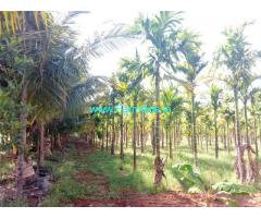 9.07 Acres Well Maintained farm for sale at Kodihalli, Hiriyur