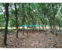 35 acre rubber plantation at for sale at Udupi District, 33 acre patta.