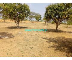 65 Acres Mango Farm for Sale near Kalwakurthy