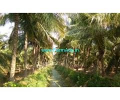 4.2 Acres Coconut Farm Land for sale near Dharapuram