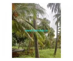20 Acres Coconut Farm Land for sale in Tenkasi