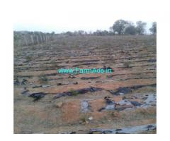 5 acres agriculture farm land for sale. 25 KMS from Madanapalli,