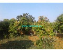 7 Acres Mango Farmland for Sale in Nimmanapalle