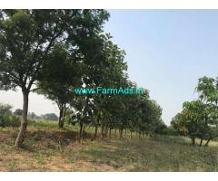 10 Acres Mango Farmland for Sale near Thimmapur