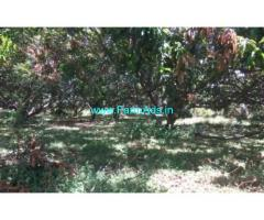 4 Acres Mango Farm Land for sale in Shenkottai