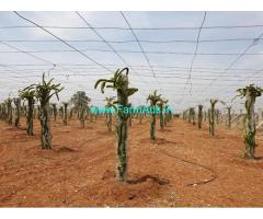 State Highway attached 34 Acres Agriculture Land for Sale in Madakasira
