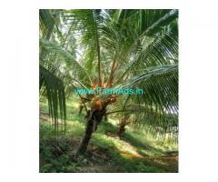 2.6 Acres Coconut Farm Land for sale in Vettaikaranpudur