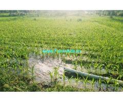 2 acre 16 gunta coconut farm for sale near Malavalli