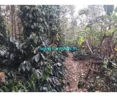 3.5 Acres Coffee Estate for Sale in Hassan,Belur Bikkod Sakleshpur Road