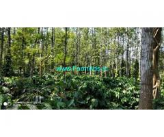 2.28 Acres Well maintained Coffee Estate for Sale in Chikmagalur