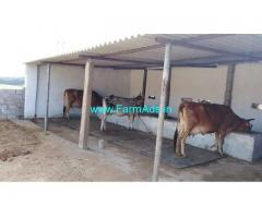 Dairy Farm with Land for Rent near Peda Narava
