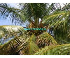 11 Acres Coconut Farm for Sale near Madurai