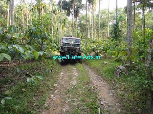 7 Acres Coconut Farm for Sale in Bittangala - Virajapete -Kodagu