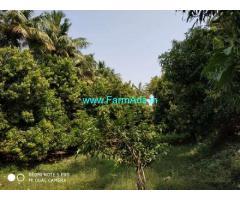 5 Acres Mango Farm Land for Sale at Perikapally